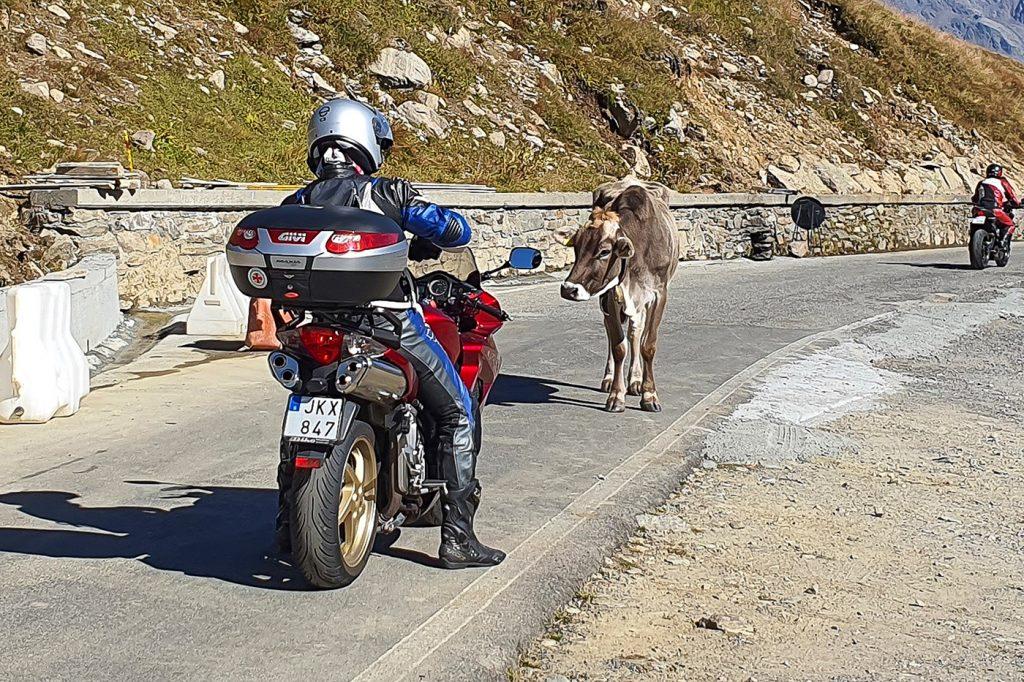 Bild från Dolomiterna